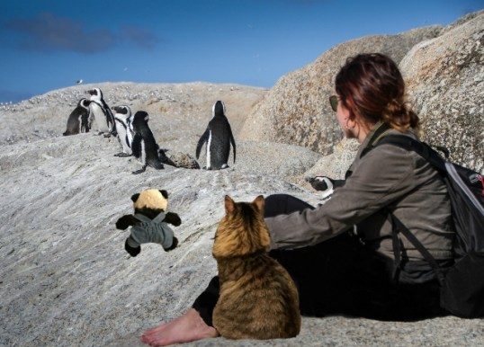 a with girl and penguins
