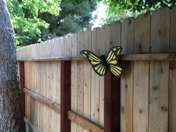 butterfly on fence