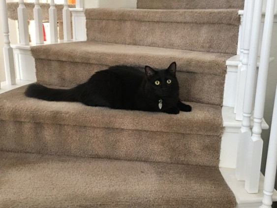 Inky on stairs3
