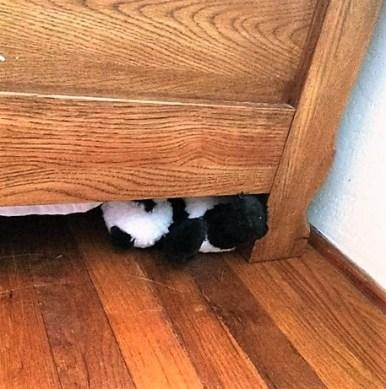 panda-under-bed