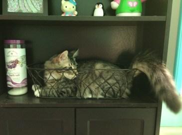 playing-on-shelf