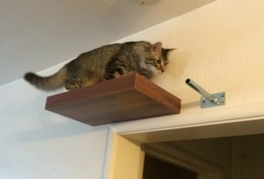 a-up-on-shelf