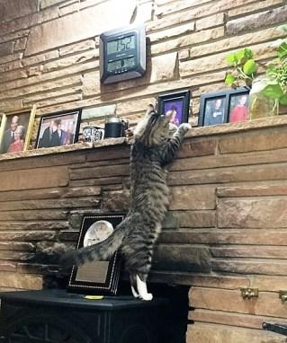 climbing-on-fireplace