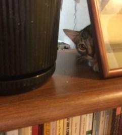 peeking-out