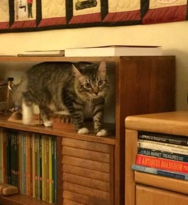 carrier-on-shelf