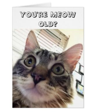 meow old