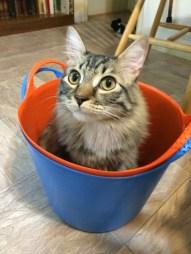 in bucket