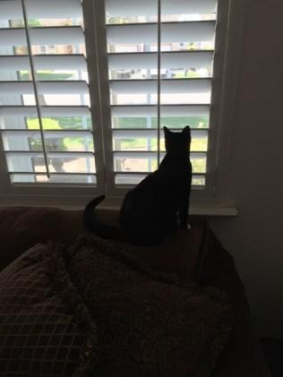 Maggie watching