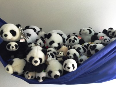 pandas in hammock