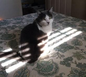 Socut in sun