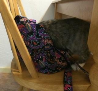 in purse