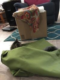 fabric and cushion