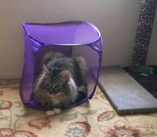 in purple basket
