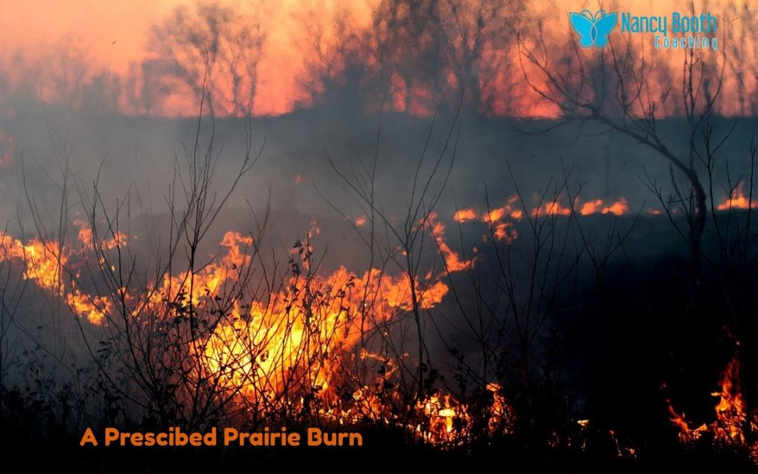 """Can A """"Prescribed Burn"""" Bring Growth to Your Life?"""