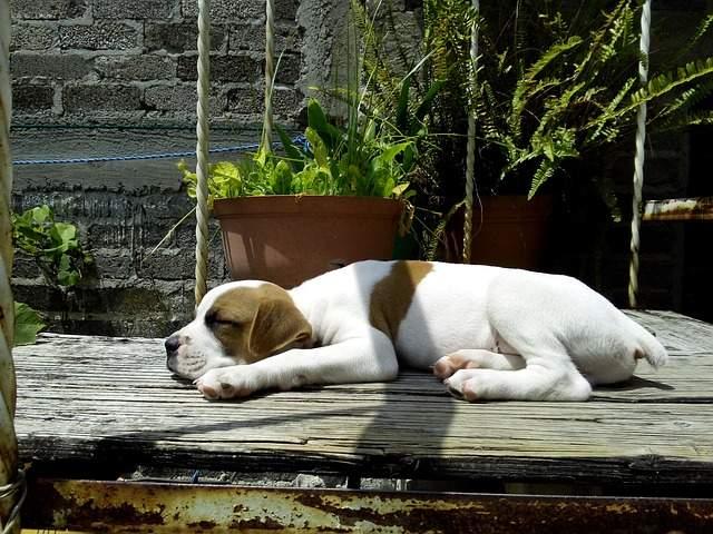 dog-nap-seo