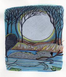 Nancy Carlson : » beaver moon