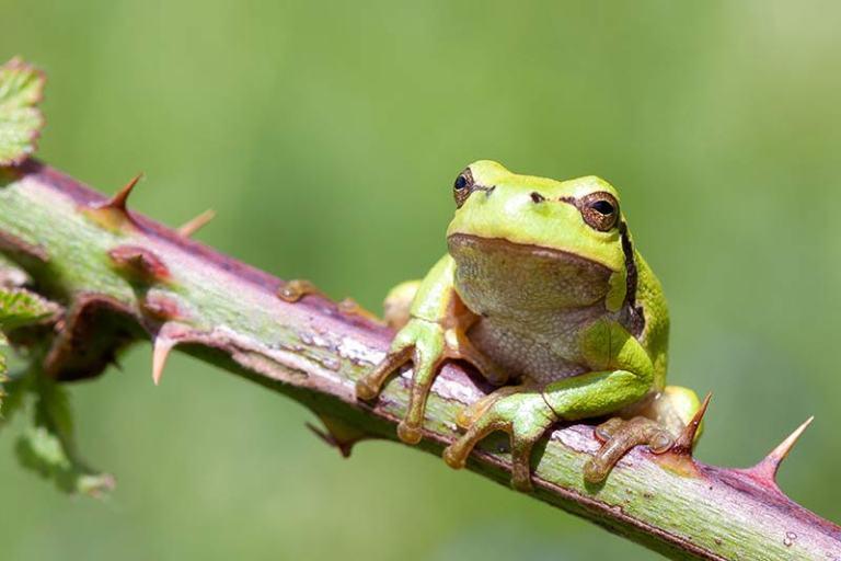 klik hier om meer foto's van overige dieren te bekijken