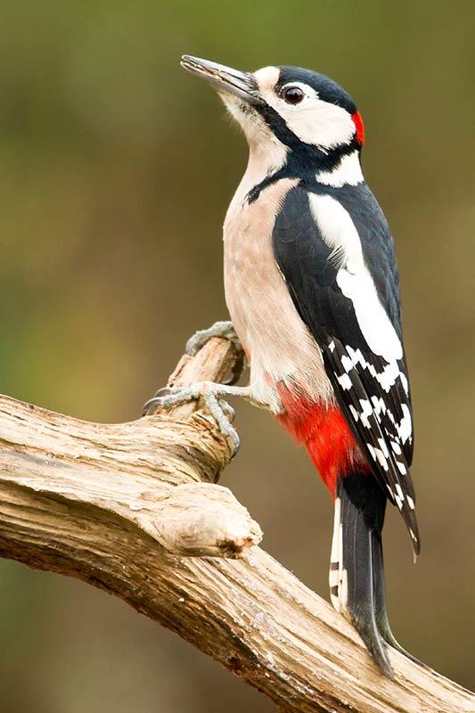 klik hier om meer foto's van overige vogels te bekijken