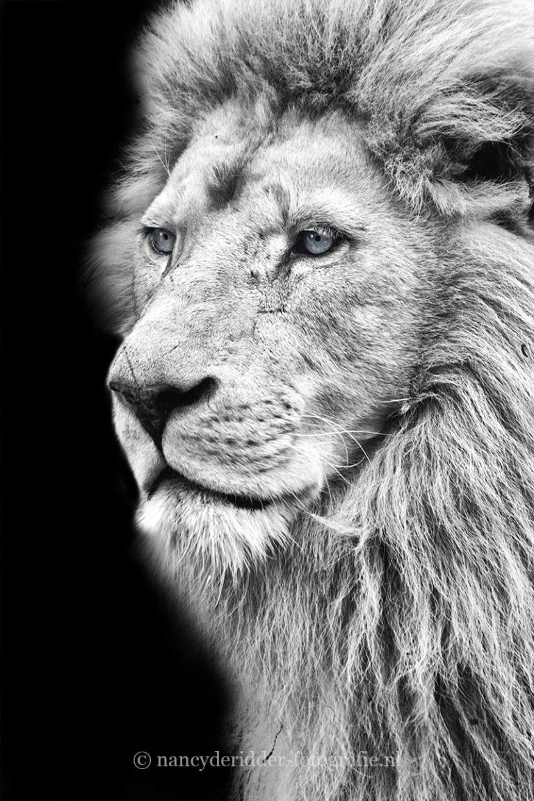 - zwart/wit foto's -