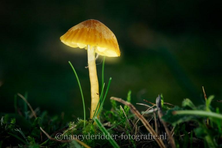 paddenstoelen, lightpainting, fantasie, herfst, mosklokje