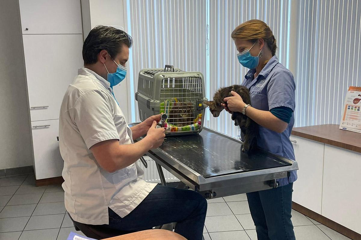 dierenarts, eerste-keer, spannend, check-up