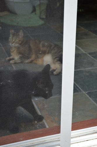 DSC_2055 2 cats