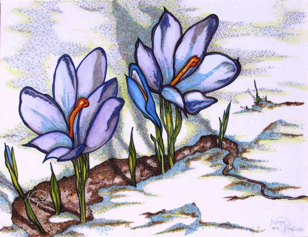 """""""Crocuses of Early Spring"""" Watercolor and Ink on Paper (2016 11x14)"""