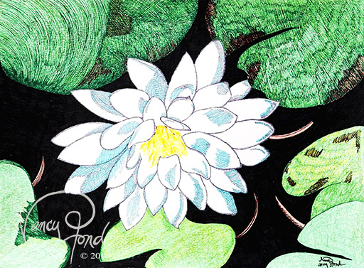 """""""Water Lily"""" Ink and Watercolor on Paper (2009 8x10)"""