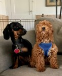 group puppy sitting group puppy care dog vacation