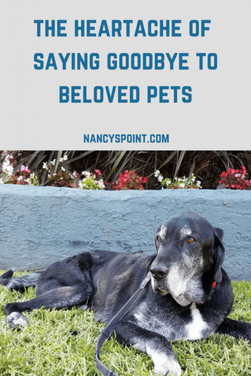 The Heartache of Saying Goodbye to Beloved Pets
