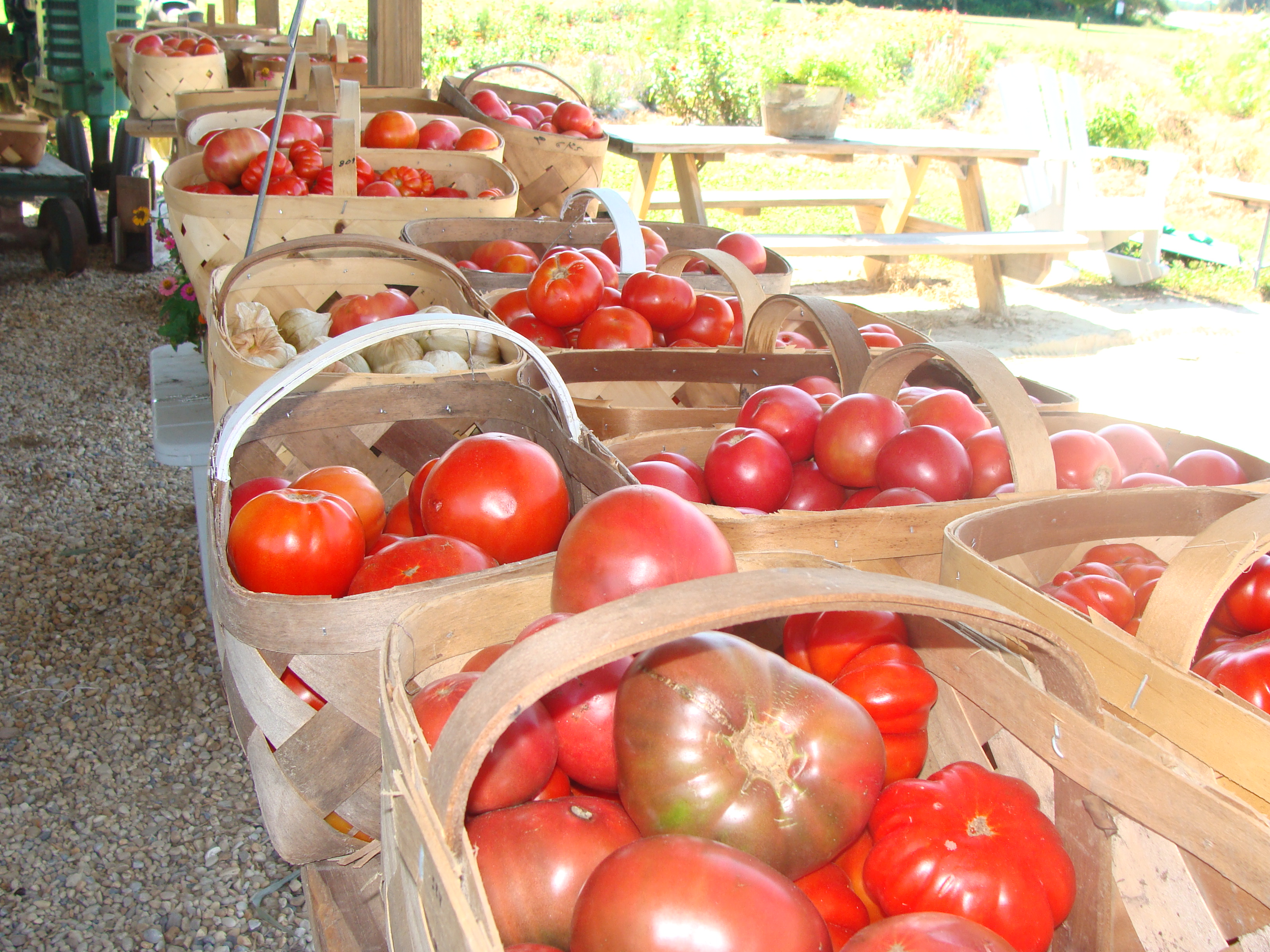All these baskets are full of heirloom tomatoes
