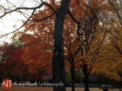 DailyUpload_164_November2012_NancyThankiPhotography