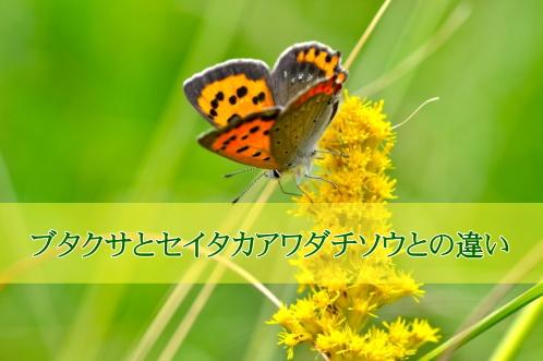 butakusa03