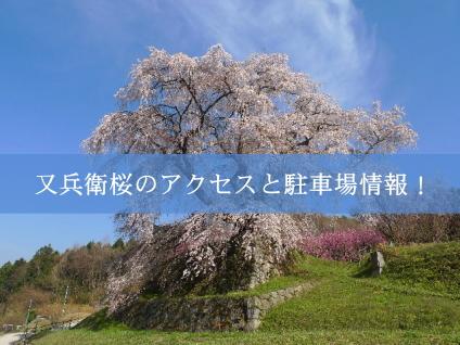 takizakura03