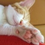 昼寝の時間はどのくらいが最適?疲労回復の効果は?