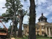 courthouse oaks