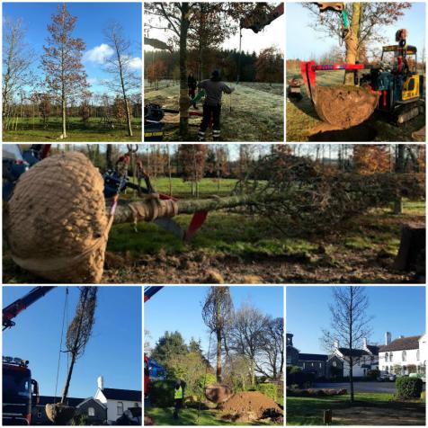 Mature Tree Planting