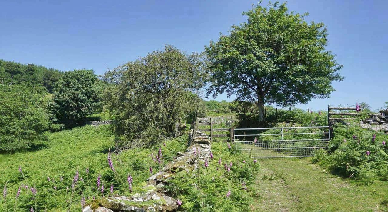 The Pandy Bach Walk to Llyn Cynwch