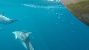 Delfinbesök