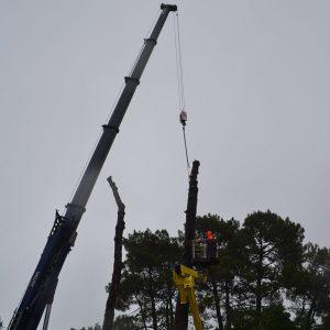 Abattage par démontage à la nacelle et grue en Pyrénées Atlantique 64 et Landes 40 990-2 - ECHEGARAY Ñaño élagage