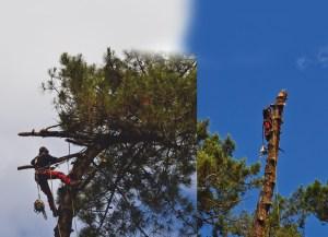 Equipes ECHEGARAY Ñaño élagage abattage image de fond 2 Spécialiste des grands arbres