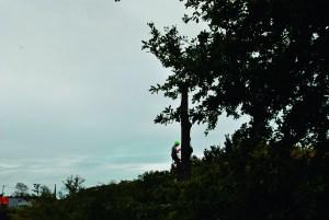 Abattage par démontage sur corde en Pyrénées Atlantique 64 et Landes 40 32 - ECHEGARAY Ñaño élagage