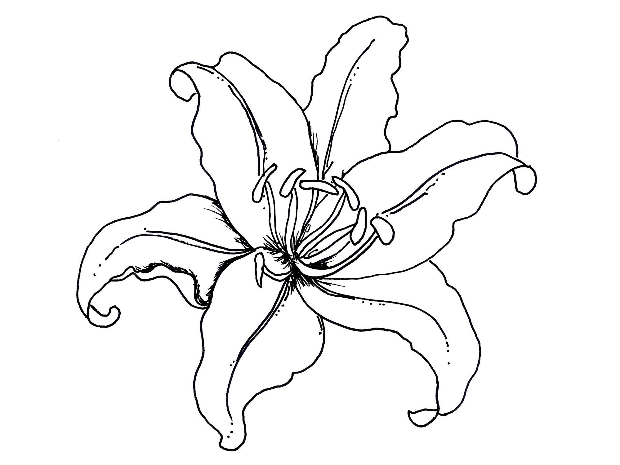 Printable Hibiscus Flower Coloring Pages