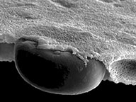 Microparticle-embedded-in-a-Nano-Web-1