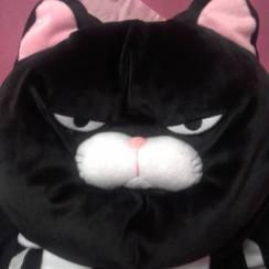 Fury Cat