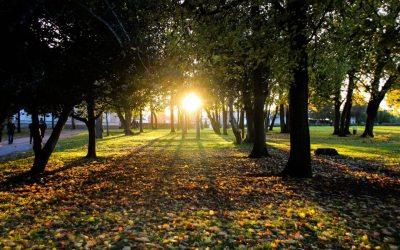 The setting sun at the Parc du Grand Blottereau