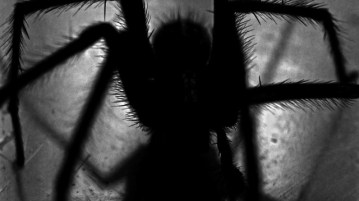 Darkness spider bugs spooky