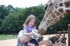The birthday girl feeding the giraffes
