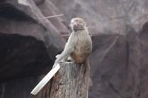 Blissful monkey