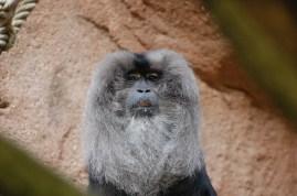 Skeptical Monkey